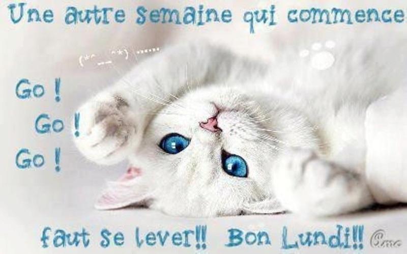Ici on se dit bonjour  - Page 2 Ksma9q10