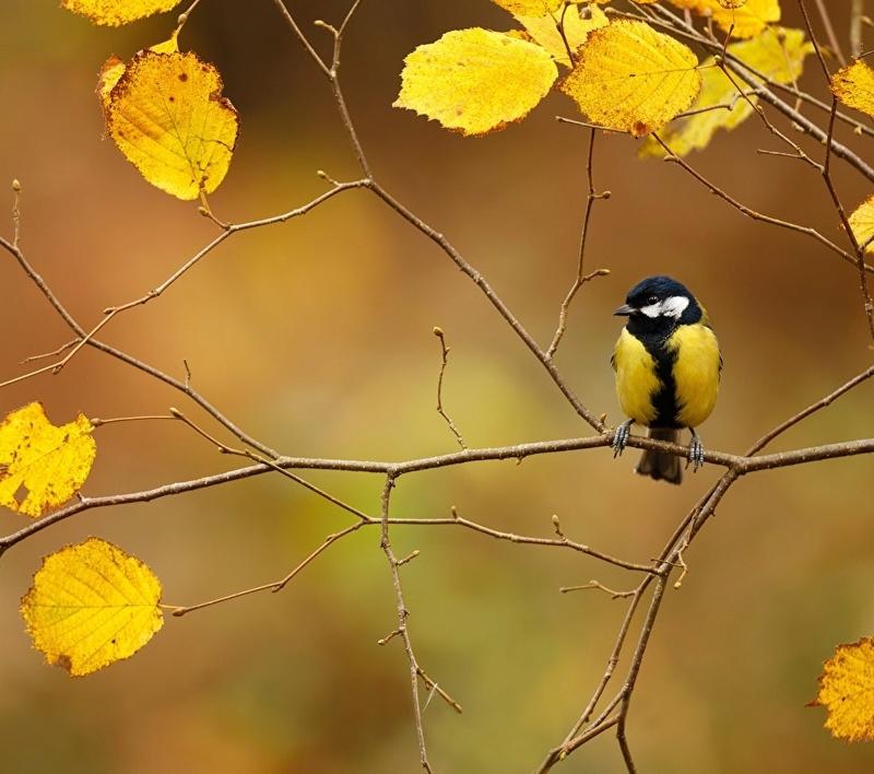 Photos d'automne - Page 2 0010