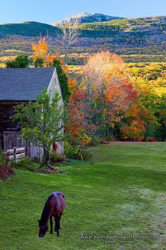 Photos d'automne - Page 2 52119e10
