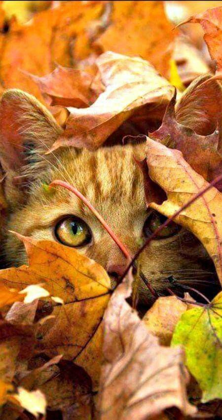 Photos d'automne - Page 2 6aba3f10