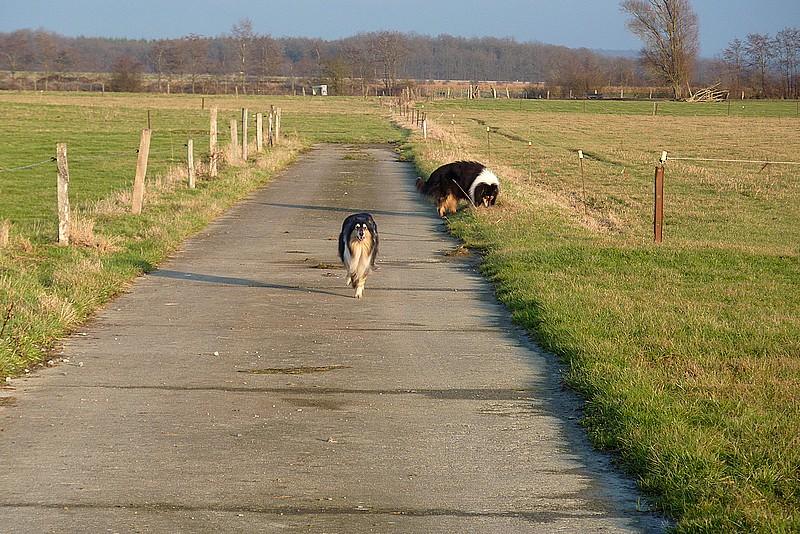 Cyrano et Caresse en promenade. Belle_14