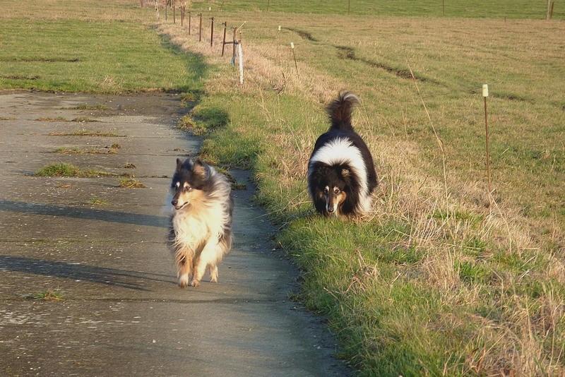 Cyrano et Caresse en promenade. Belle_19