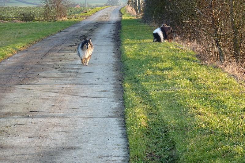 Cyrano et Caresse en promenade. Belle_21