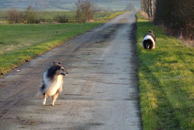 Cyrano et Caresse en promenade. Belle_22