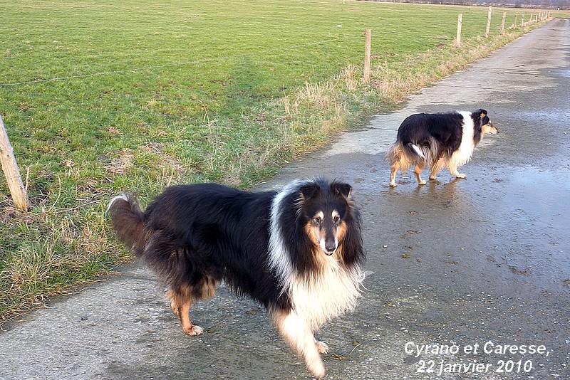 Cyrano et Caresse en promenade. Belle_25