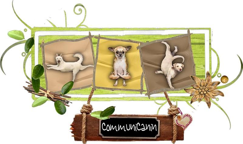 CommuniCanin