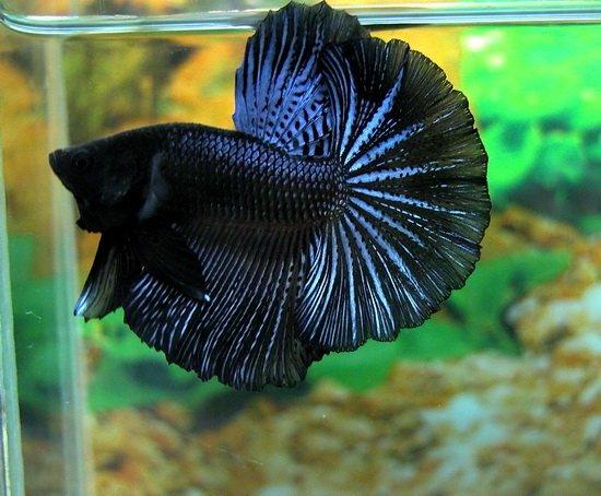 Mon aquarium 20881911