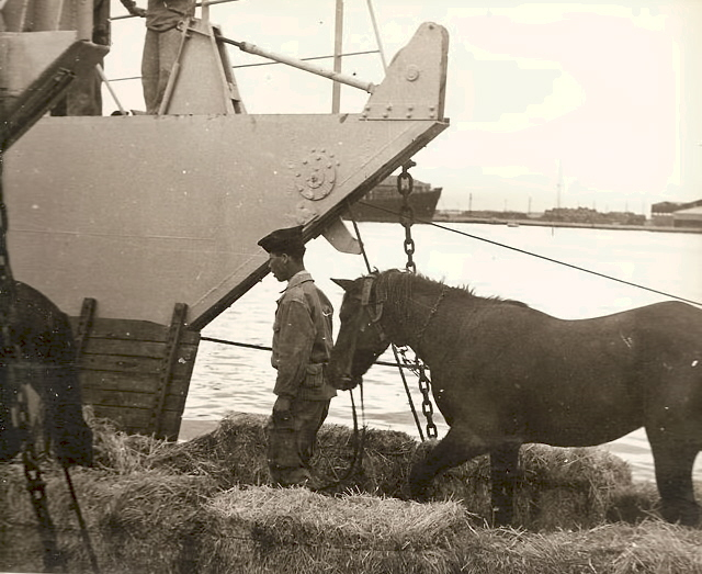[ Afrique du Nord ] Marine Bône... Bone_510