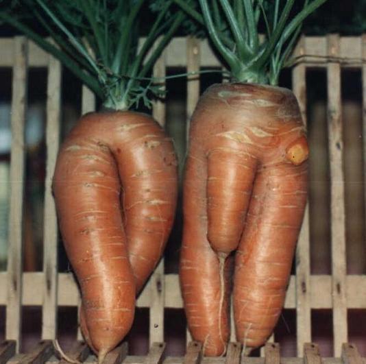 Vers des vélos en fibre de carottes ? Mr_et_10