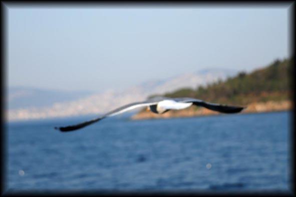 ada fotoğrafları Marti_10