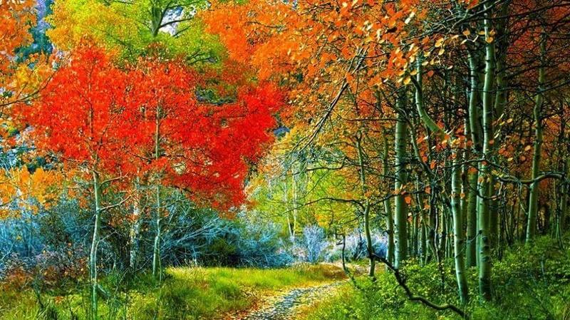 Photos d'automne - Page 2 14642010