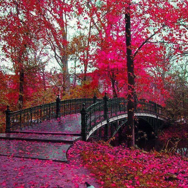 Photos d'automne - Page 2 14900410