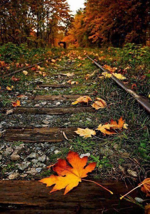 Photos d'automne - Page 2 22140810