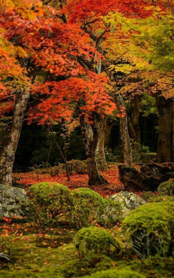 Photos d'automne - Page 2 22154310