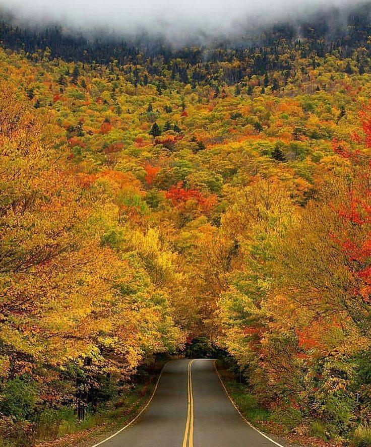 Photos d'automne - Page 2 22195510