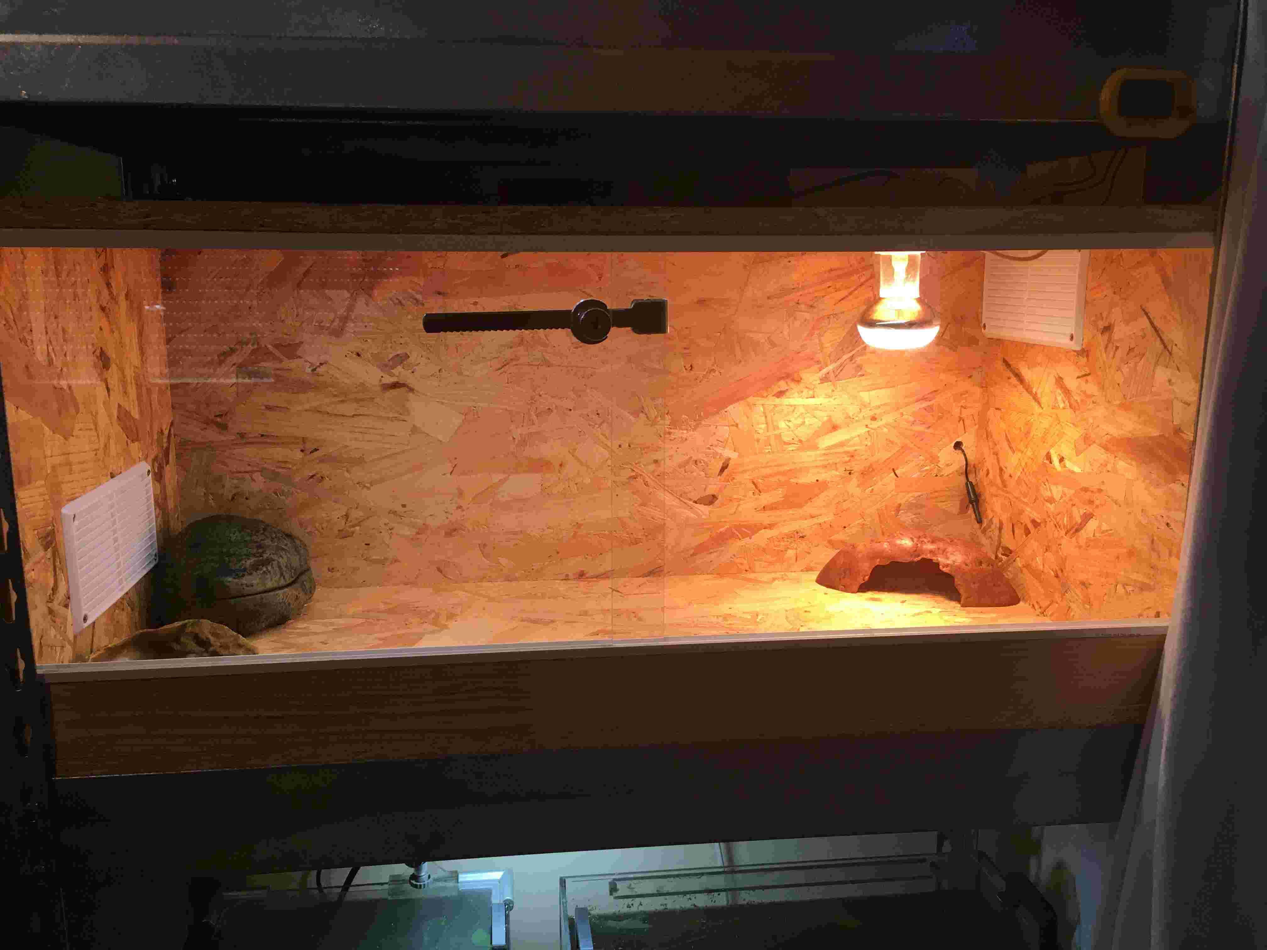 Mon terrarium en OSB 00110