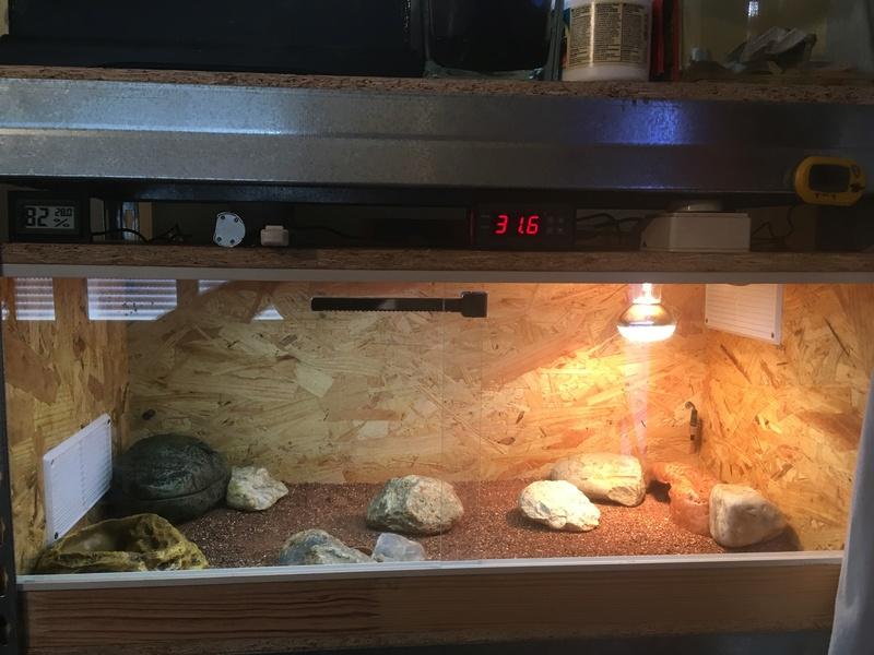 Mon terrarium en OSB 001110
