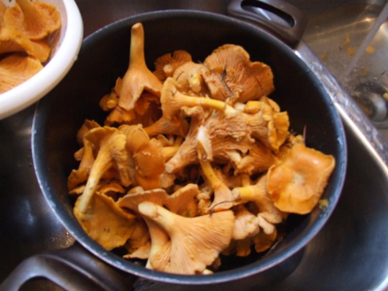 Hé ben, on a des champignons......comestibles, j'espère! Dscf3313