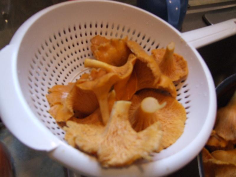 Hé ben, on a des champignons......comestibles, j'espère! Dscf3314