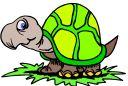 Les tortues. Tort6210
