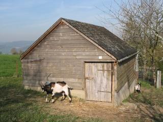 La chèvre naine Cabane13