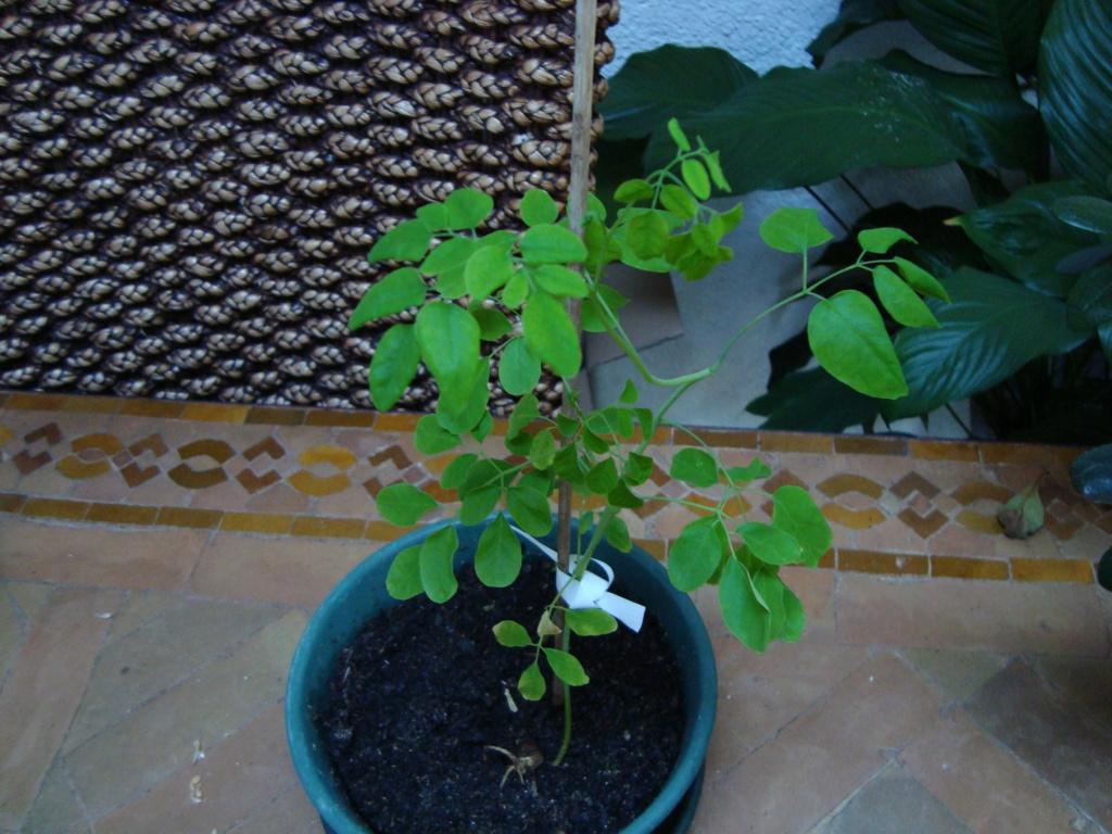 160L Biotope amazonien - Nouvelle espèce !! - Page 3 00012713