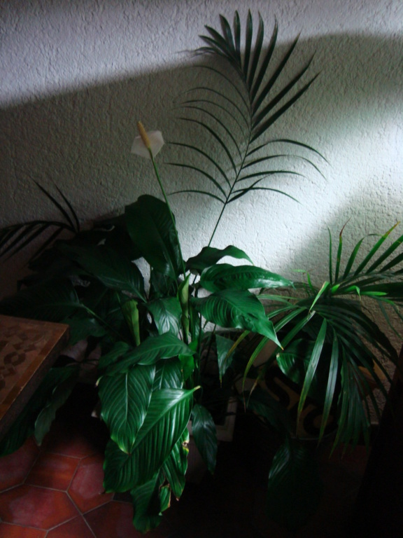 Plantes à ne pas mettre dans vos bacs Dsc00210