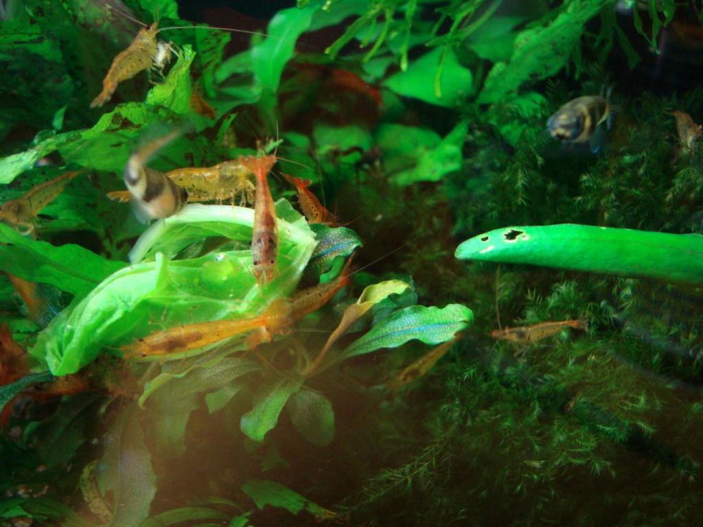 [PROJET]future aquarium amazonien 175L Dsc00811