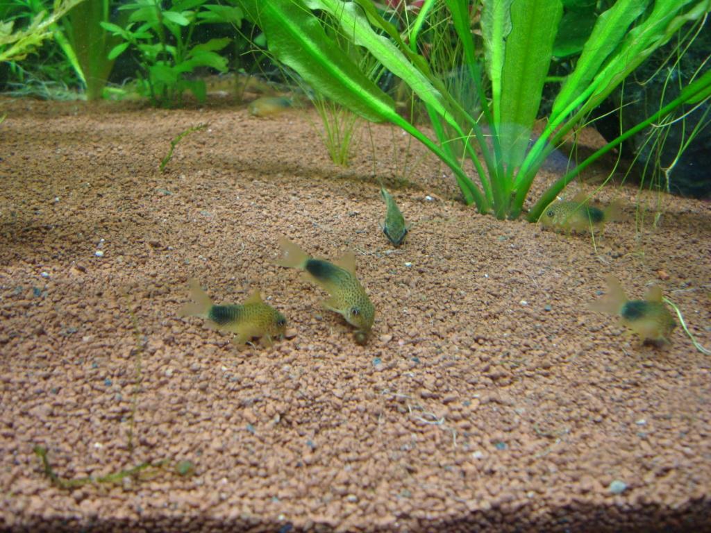 [PROJET] Mon futur aquarium idéal Dsc01733