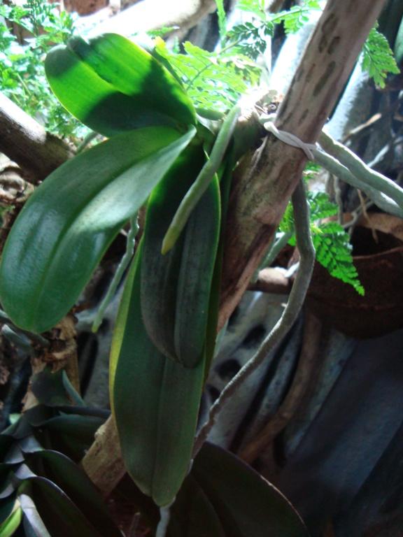 Des plantes pour un lycée - Page 2 Dsc02713