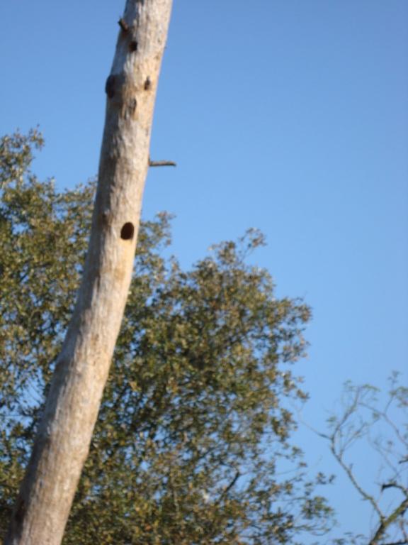photographie d'oiseaux Dsc03413