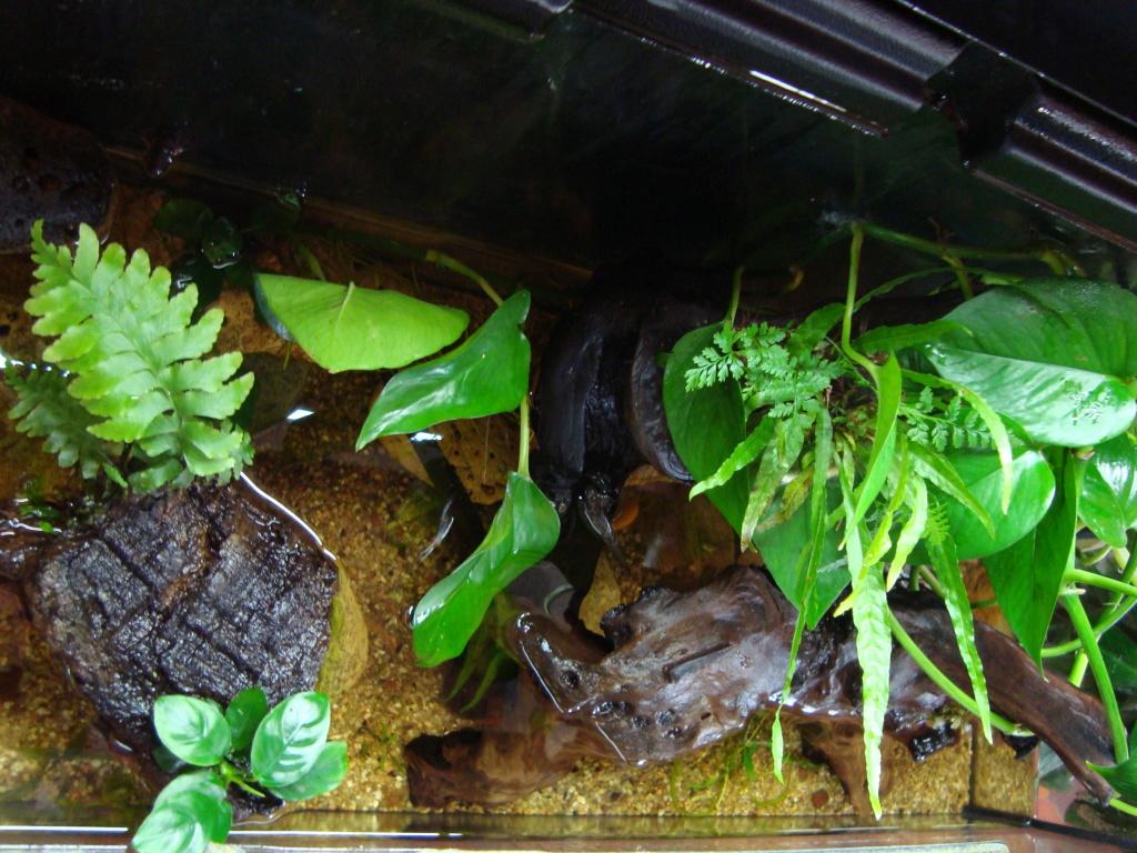 retour sur mon projet aquaterrarium - Page 2 Dsc03424
