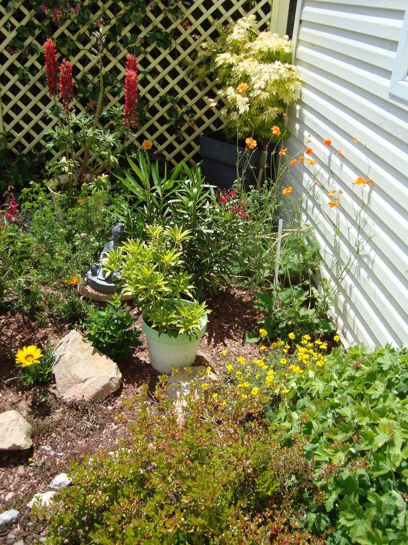 Mon jardin potager Dsc03810