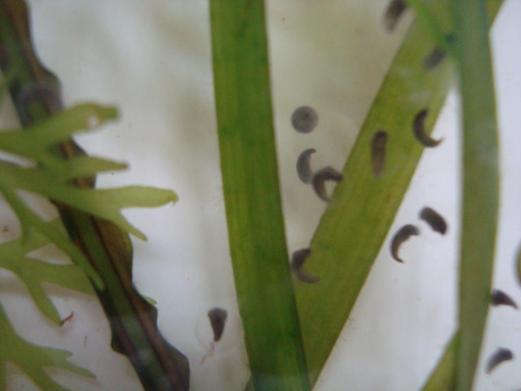 Reportage photos sur les Axolotls Dsc07316