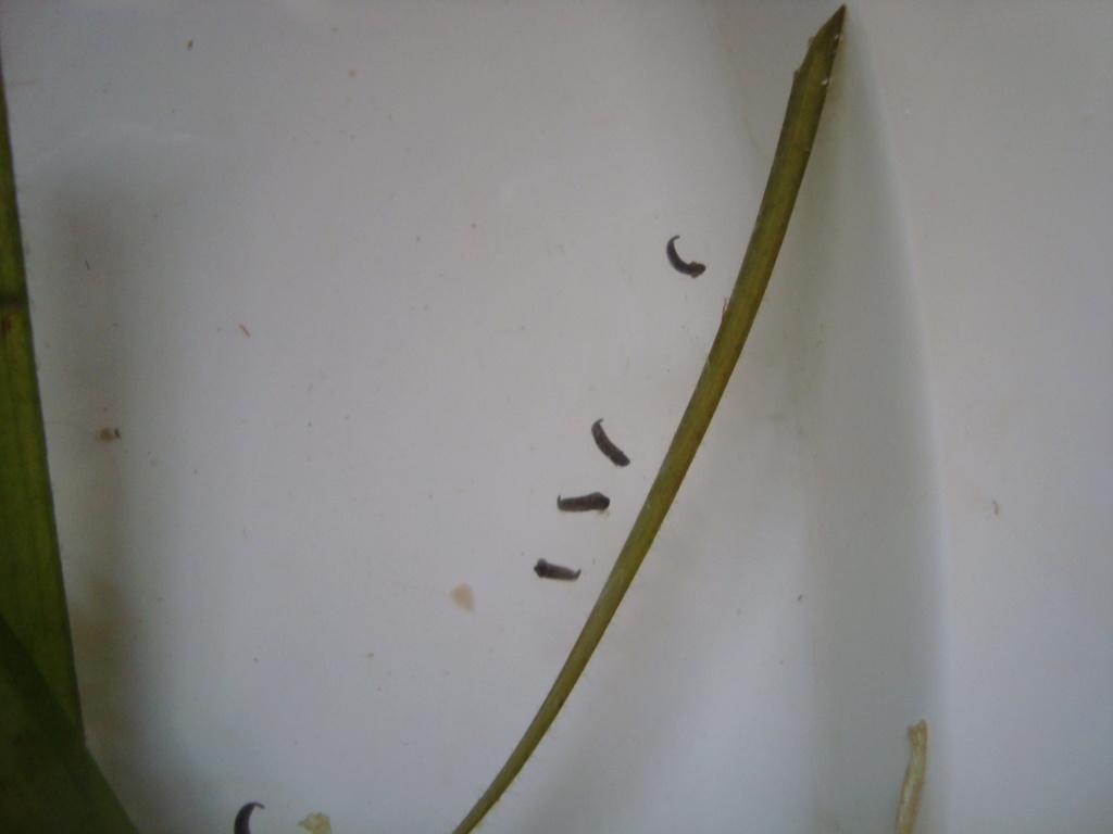 Reportage photos sur les Axolotls Dsc07414