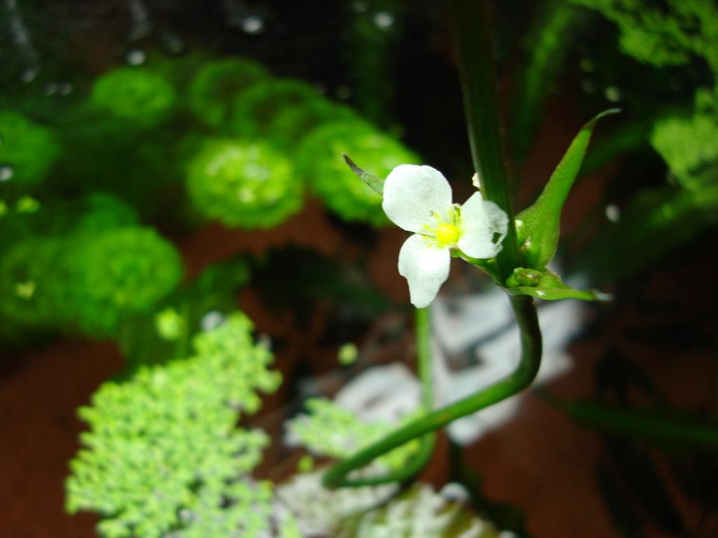 Mes Fleurs et Plantes - Page 3 Dsc09627