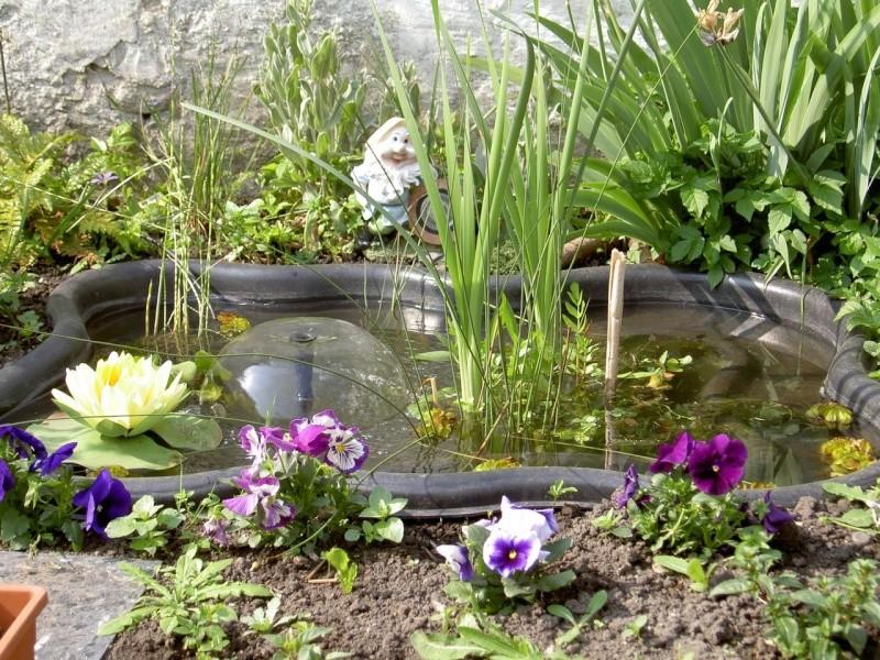 bassin Pict2311