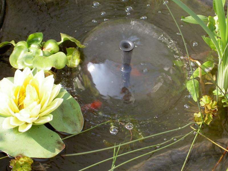 bassin Pict2312