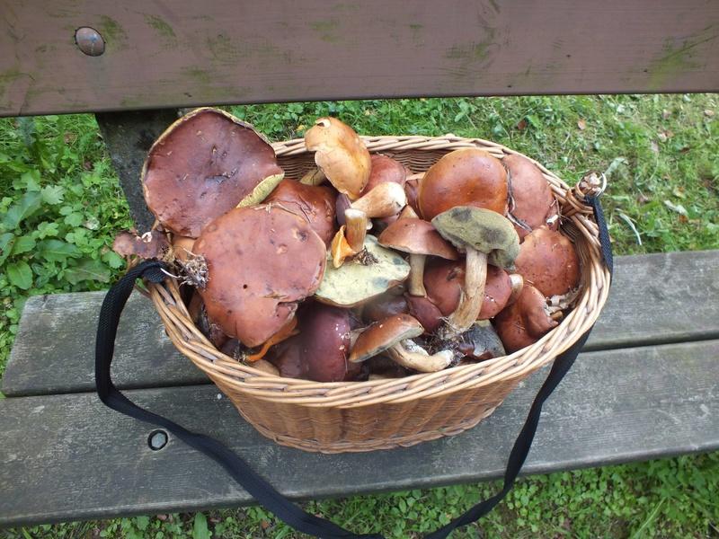 les champignons 21054810