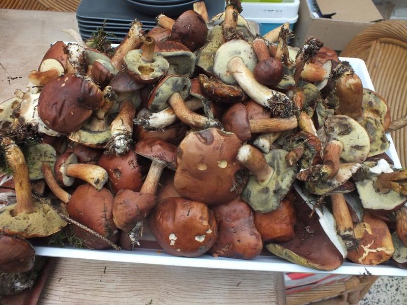 les champignons 21056310
