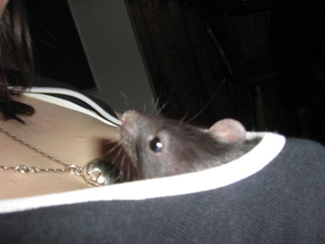 Rats, souris, différence et cassage de mythes Img_4214