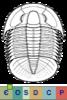 Super-famille Anomocaroidea