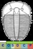 Super-famille Aulacopleuroidea