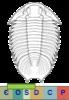 Super-famille Lichoidea