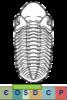 Super-famille Phacopoidea