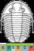 Super-famille Proetoidea