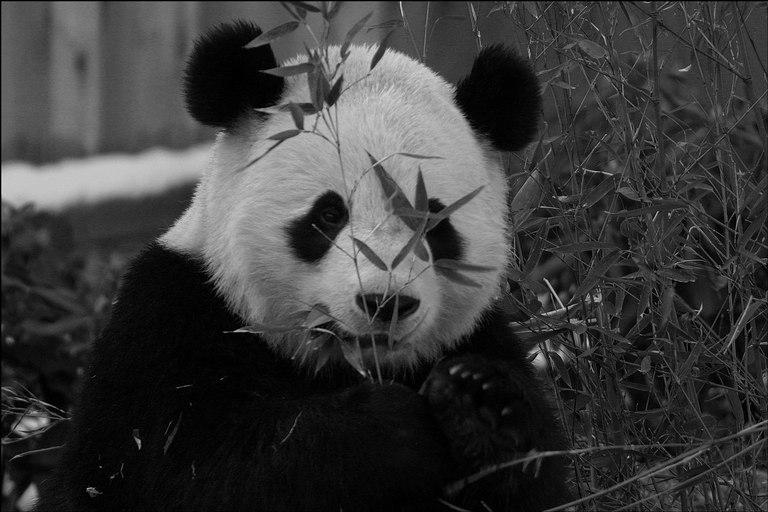 Votre maquillage gothique - Page 4 Panda-10