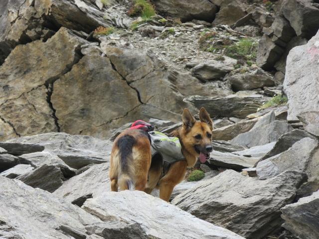 Trek - itinérance avec un chien - Page 5 Img_2210
