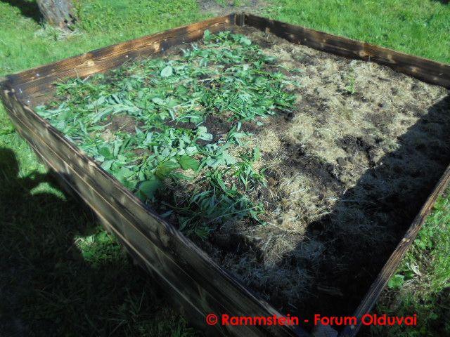 [Jardinage] Culture en bacs et Hügelkultur Dsc02811