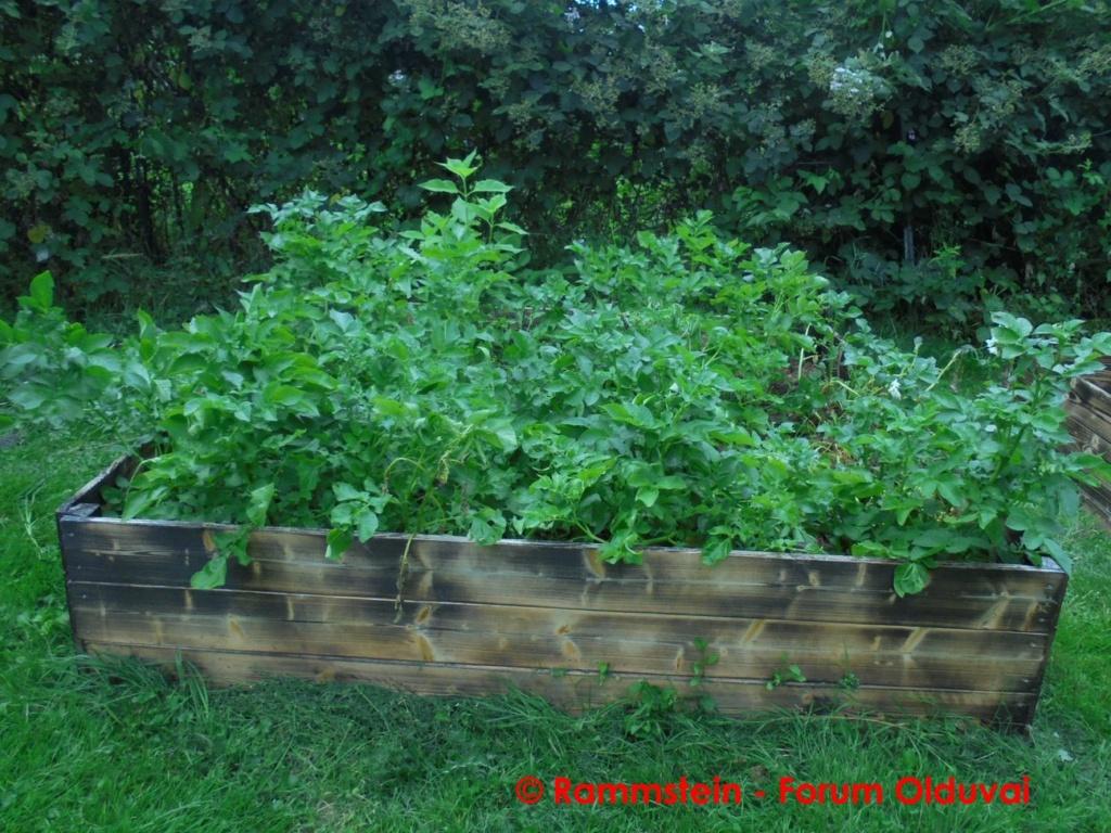 [Jardinage] Culture en bacs et Hügelkultur Dsc03410